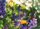 Goldfinch on Lilac Tree Glass Worktop Saver